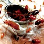 【虫姦】ヴァギナに大量のコオロギ 芋虫 ゴキブリ挿入され淫猥な声で悦ぶ女