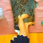 インセクトクラッシュ~巨大ゴキブリを生ストッキングで踏み殺す美脚美女