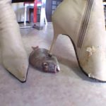 【フークラ】ブーツのOL女王様がタバコ片手に魚の目玉をヒールで串刺し!