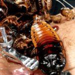 【蟲姦】ゴキブリ異種姦!膣や肛門の穴を掻き回され嬌声を上げ悶える女